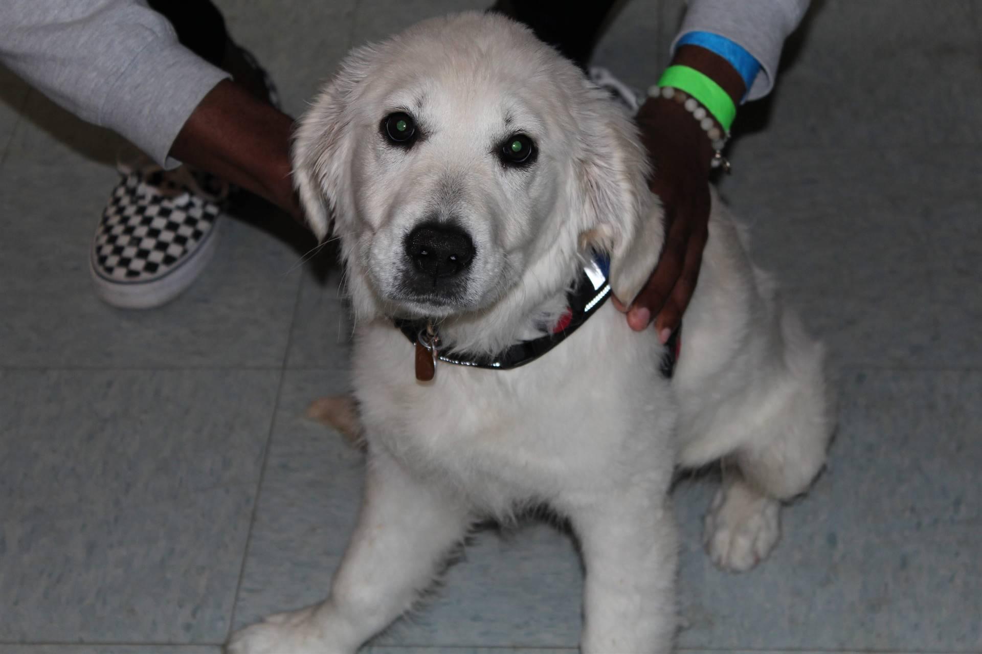 rosie the dog