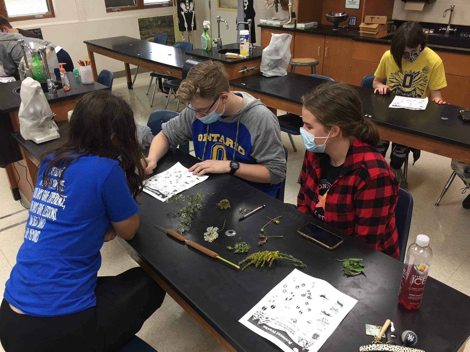students investigate